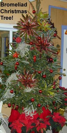 bromeliad christmas tree